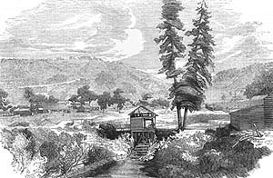 gold rush in california during january of 1848 Today in history - january 24 on january 24, 1848, james w marshall discovered gold on the property of gold and gold rush in the chinese in california.